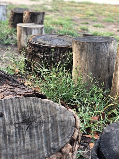 a photo of stumps in the play grounds