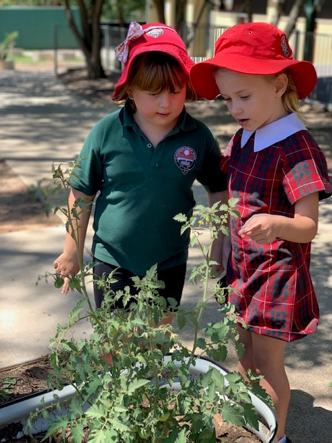 a photo of year 1 girls playing in the school garden